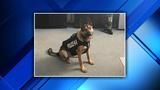 Donation provides bulletproof vest for Harper Woods police K-9
