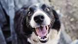 New phone app allows pets to have social media account, owners to&hellip&#x3b;