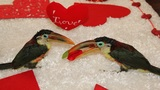 Toucan have a happy Valentine's Day
