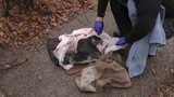 Reward offered for information after puppy found wrapped in plastic in Detroit