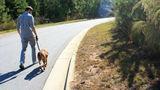 Dearborn dog-friendly race raises money for animal shelter
