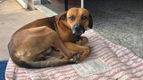 Loyal dog waits outside Brazil hospital where owner died over four&hellip&#x3b;