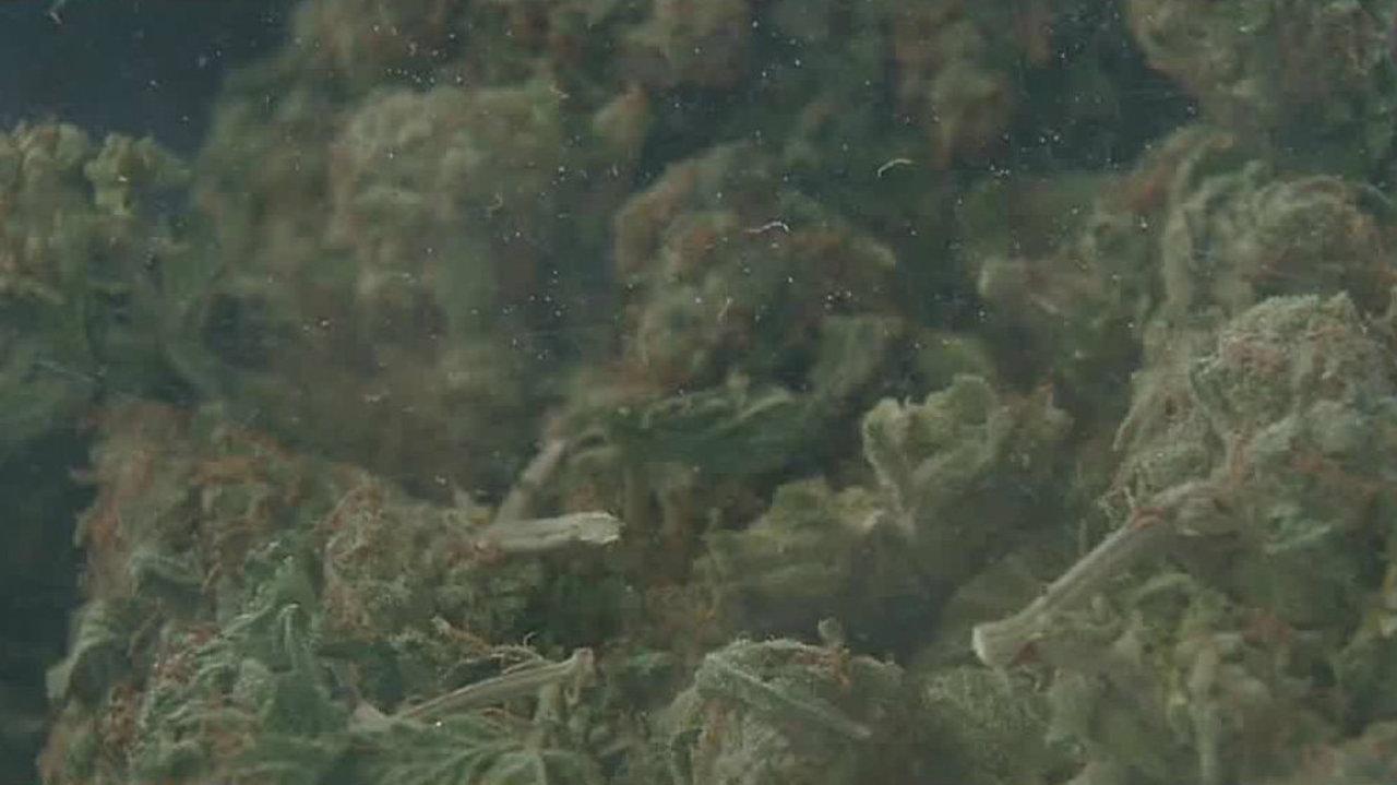 837d26ba72700a Video thumbnail for Sterling Heights mayor considers marijuana dispensaries