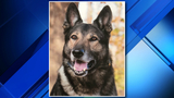 Oakland County K-9 receives body armor donation from nonprofit