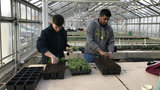 U-M Campus Farm: Food grown by students, for students