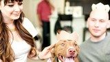 Pampering pets with parties, and more!