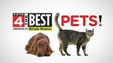 Vote 4 The Best: Pets - Vote for your favorite places in metro Detroit!