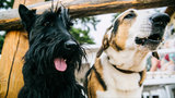 Michigan sees large jump in canine influenza cases this summer