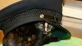 Livonia police bodycam video shows cat rescue
