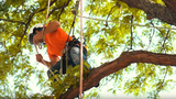 Michigan native adventures in the canopies to build zip lines, tree houses