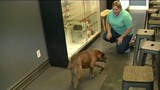 Dog reunited with Roseville family after thief crashes stolen car with&hellip&#x3b;