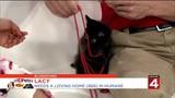 Fee-free felines