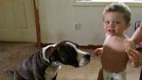 Police credit dog for saving missing Michigan toddler