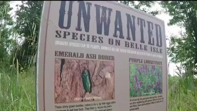 How to report invasive species in Michigan