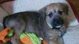 Eastpointe couple pleads for thieves to return 9-week-old puppy taken&hellip&#x3b;