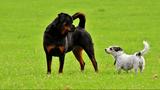Farmington Fido Festival is designed for dogs
