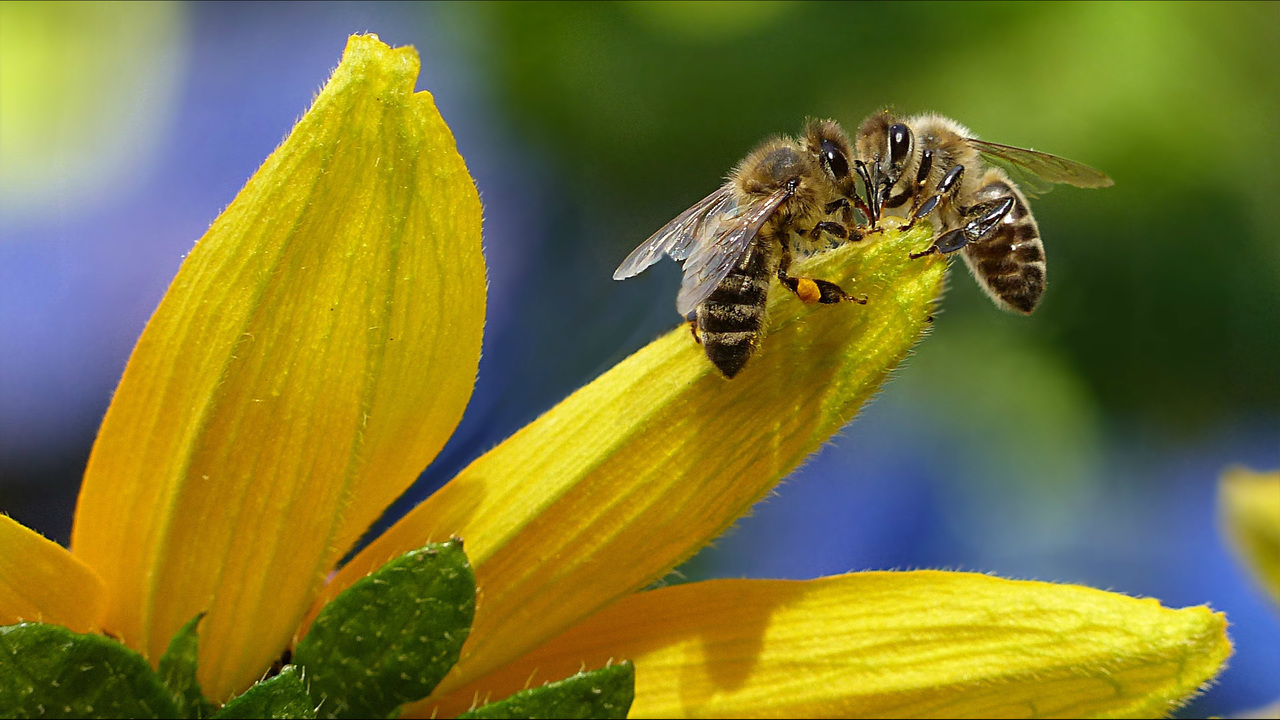 Bees in the D partners with Ford to install beehives at Michigan Assembly Plant in Wayne