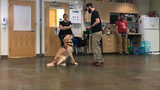 We took our dog to training classes: Here's how it's going (Week 2)