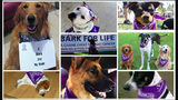 Bring your best friend to Bark for Life of Greater Ann Arbor
