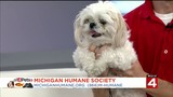 Dog lovers can attend free events to help animals at Michigan Humane Society