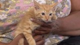 Dodge the cat needs a new home after being found on Detroit freeway