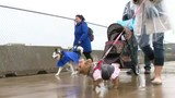 Michigan Humane Society holds 13th annual Mega March for Animals event