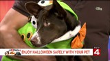 Your pet can have a fun, safe Halloween with cool stuff from Premier Pet Supply