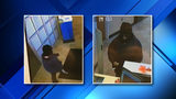 Police investigating bank robbery in Macomb County