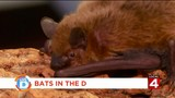 You can help this furry creature avoid extinction