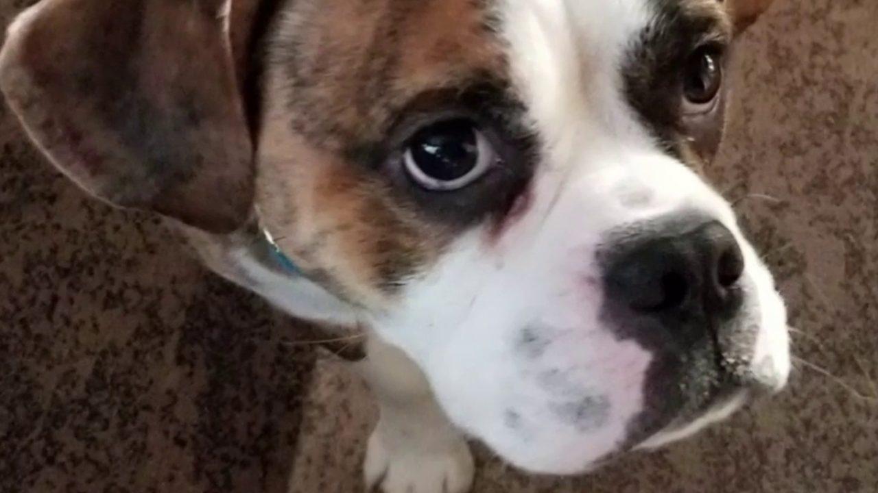 Northville man alleges sick puppy bought at Novi pet store