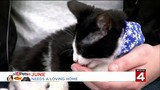 Help homeless pets find a home this holiday season with Michigan Humane Society