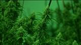 Law enforcement prepares for legal marijuana