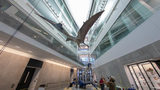 Massive pterosaur now 'in-flight' at U-M's Museum of Natural History in&hellip&#x3b;