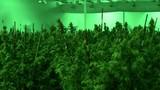 Marijuana in Michigan: First day of legal recreational use