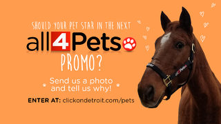 All 4 Pets Put Your Pet in a Promo contest Dec. 2018