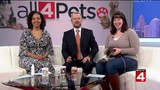 Mutts, Meows and Mimosas at Purrfect Bow Wow Brunch