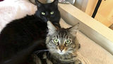 Silicon Valley landlord rents $1,500 studio apartment to 2 cats