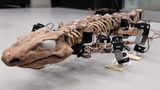 VIDEO: Robot recreates the walk of a 290-million-year-old creature