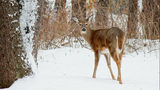 City of Ann Arbor: 112 deer lethally removed during annual cull, parks&hellip&#x3b;