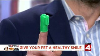 Premier Pet Supply helps give your pet a healthy smile