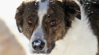 What to do if you see a pet left outside in the cold