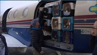 100 chihuahuas transported to Michigan from over-crowded California shelters