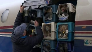 Rescue mission brings dogs from California to Michigan