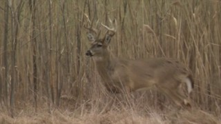 Experts fear disease turning Michigan deer into 'zombies' could one day&hellip&#x3b;