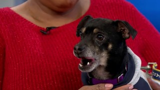 Pet of the Week: Durby needs a home