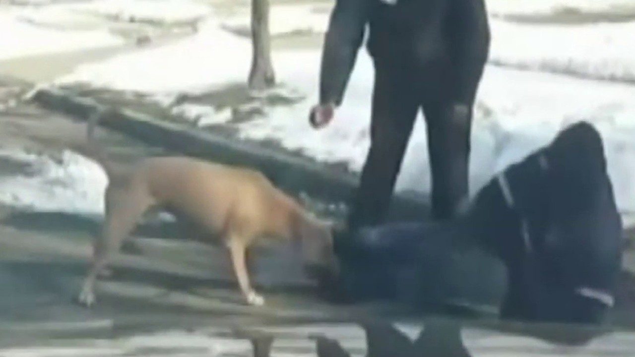 Image of: Crush Video Thumbnail For Dog Owner Speaks After Video Shows Dog Attacking Mail Carrier Clickondetroit Owner Of Dog Caught On Video Violently Attacking Mail Carrier