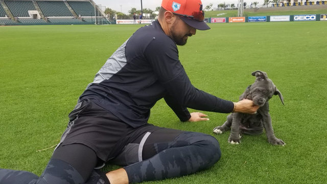 Detroit Tigers OF Nicholas Castellanos gets a puppy - and it's adorable