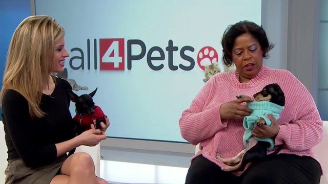 Pets of the Week: Panther and Anthony
