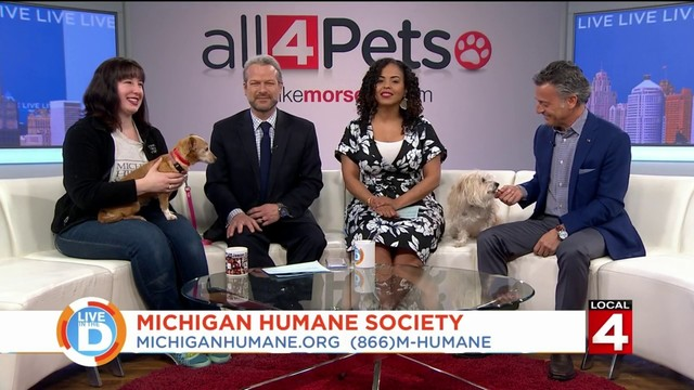 Mike Morse is helping homeless pets find a forever home!