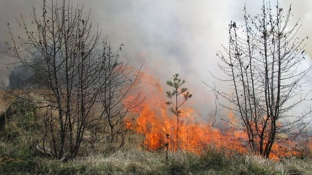 Controlled burns to be conducted at 5 Ann Arbor locations this spring